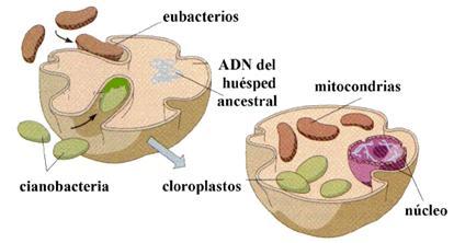 Autotrofos fotosinteticos y quimiosinteticos 56
