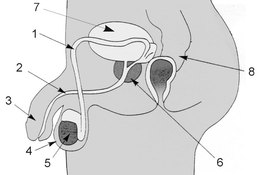 Imagenes Del Sistema Reproductor Masculino Y Femenino